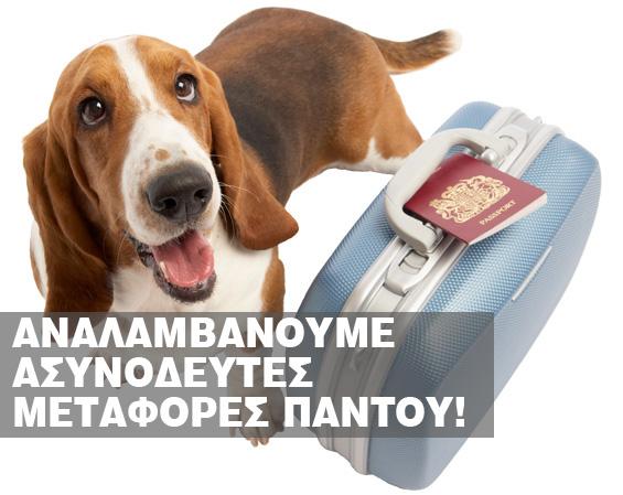 http://petaxi.gr/wp-content/uploads/2017/03/dog-case.jpg